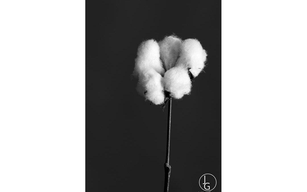 HarCo Cotton 5