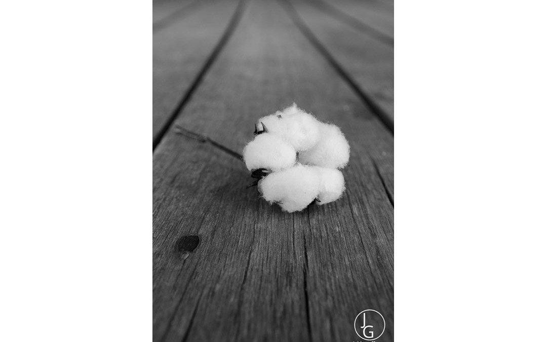 HarCo Cotton 6