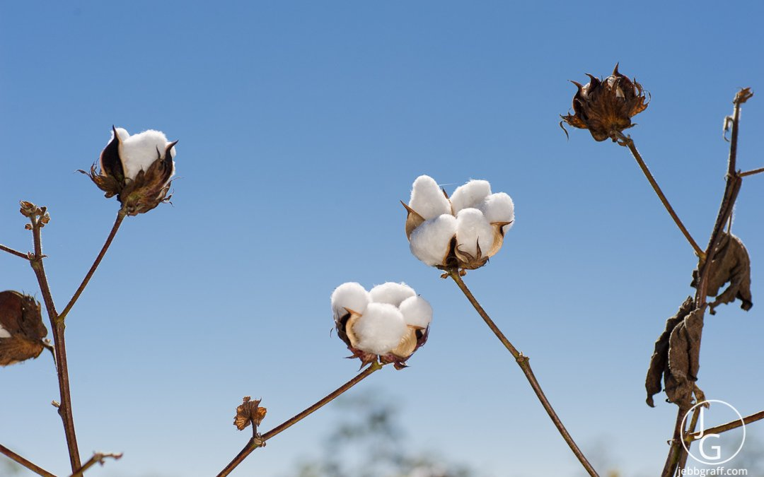 HarCo Cotton, Plans, Updates