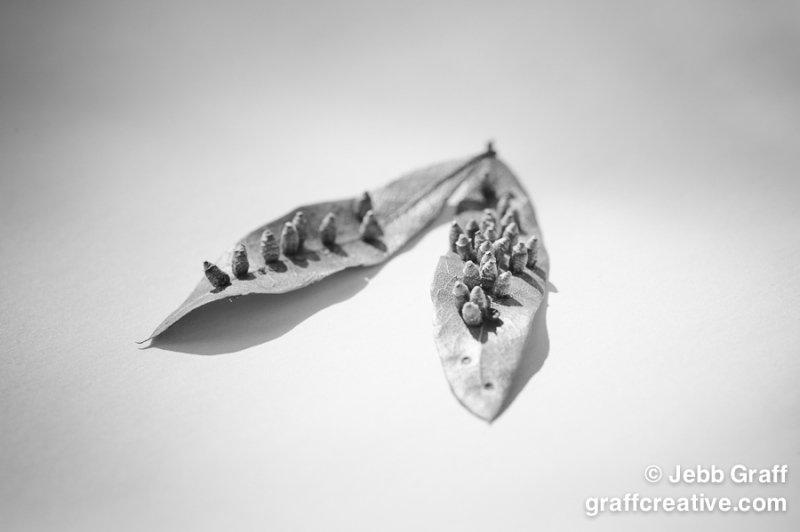 Nature - Raleigh Photographer - Jebb Graff